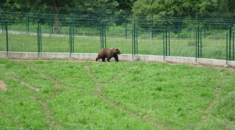 Osas semilibertad senda del oso