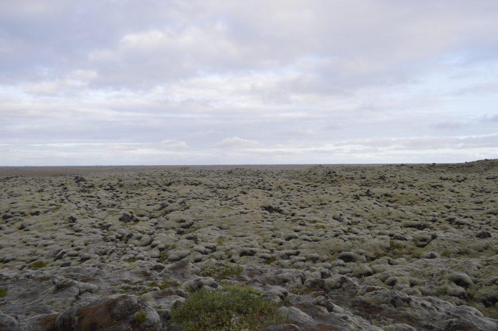 inmensos campos de musgo