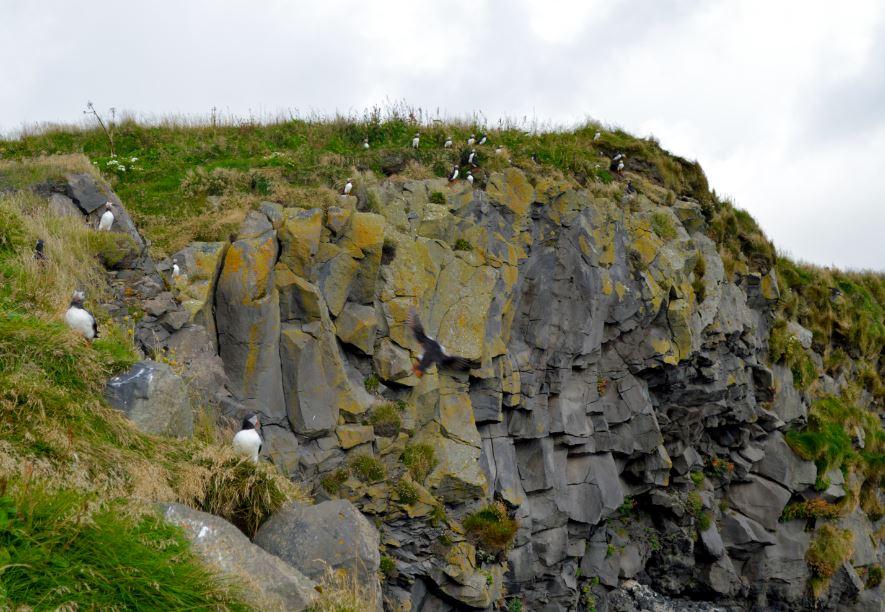 Frailecillos Islandia