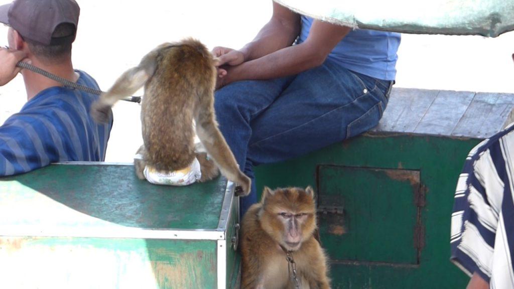 monos marrakech