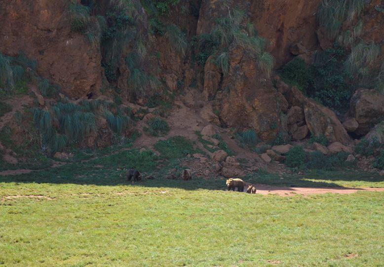 Cabarcenos osos