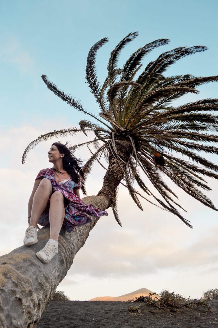 palmera Masdache