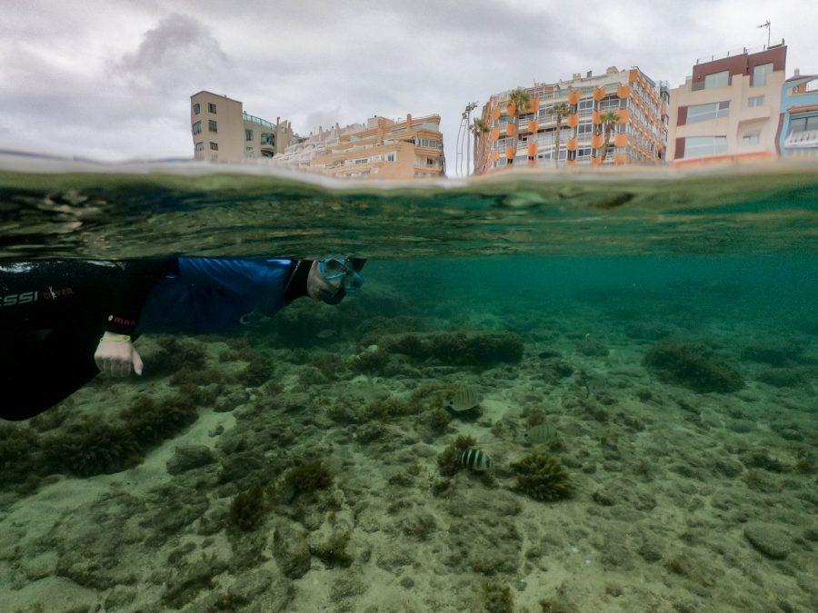 Snorkel en las Canteras que ver en Gran Canarias